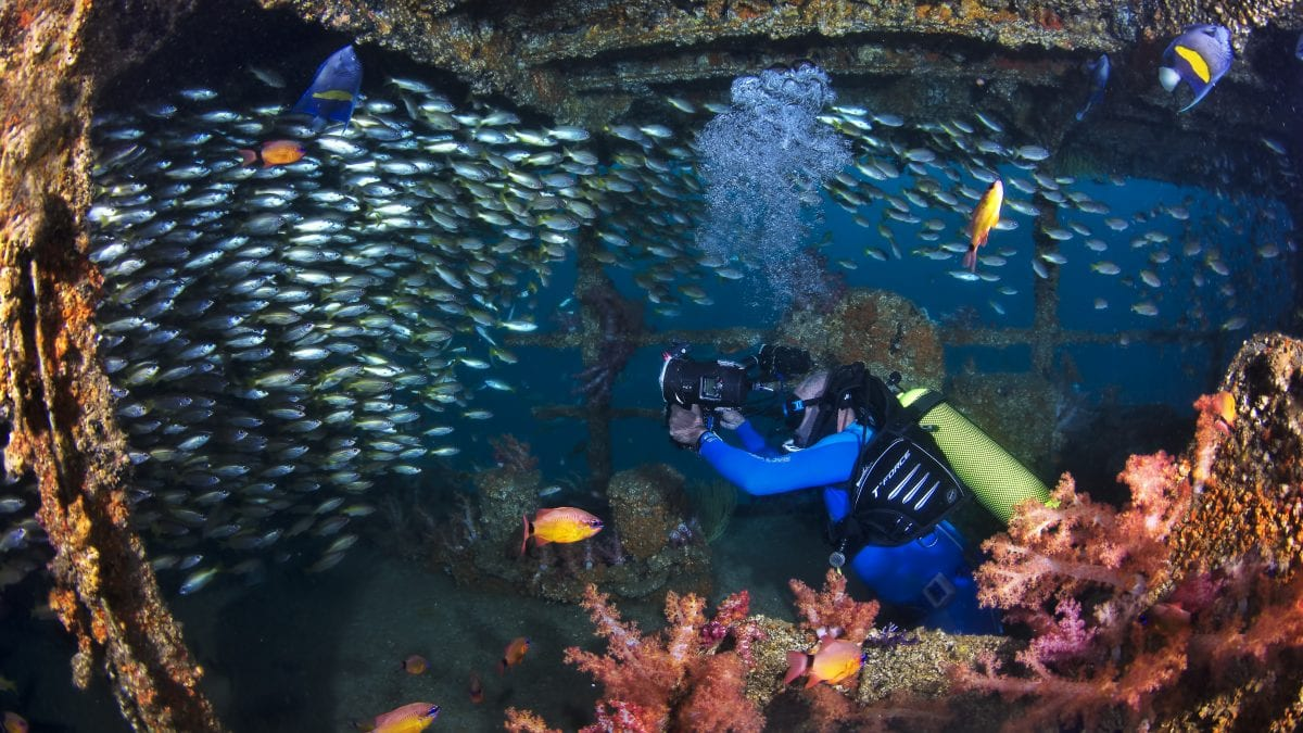 Diving Diving in the Daymaniyat Islands 1