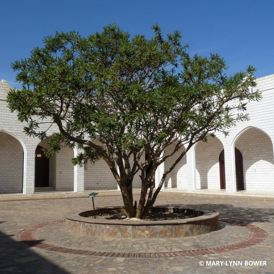 Places to explore Dhofar Museum of Frankincense Land